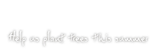 Hug a Tree - Help us plant trees this summer