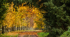 Harptree_court-autumn-leaves-cropped