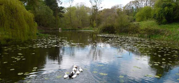 The Hatch, Worcestershire_duckpond