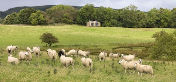 4 Bothy-and-sheep