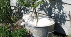 Cat in plant pot