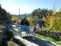 Take a spin in the horse and cart