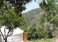 Orange Grove Yurt